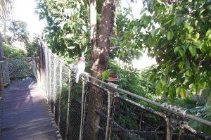 Loro Parque auf Teneriffa